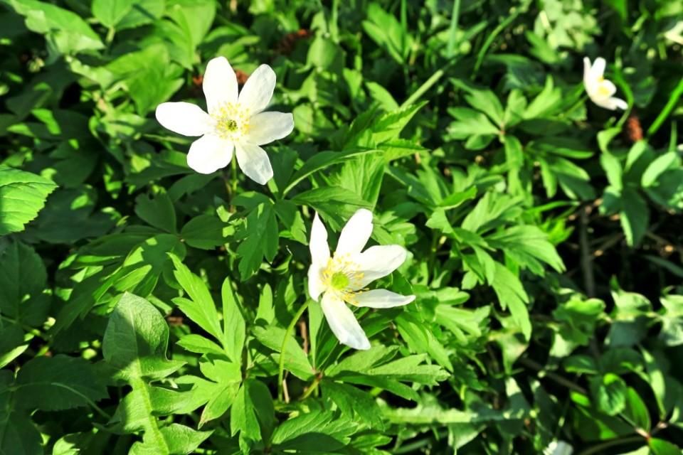 Jaro na Vysočině
